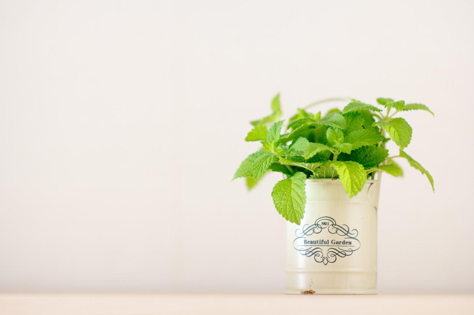 ミニマリストを目指すとなぜだか観葉植物に興味が沸く?
