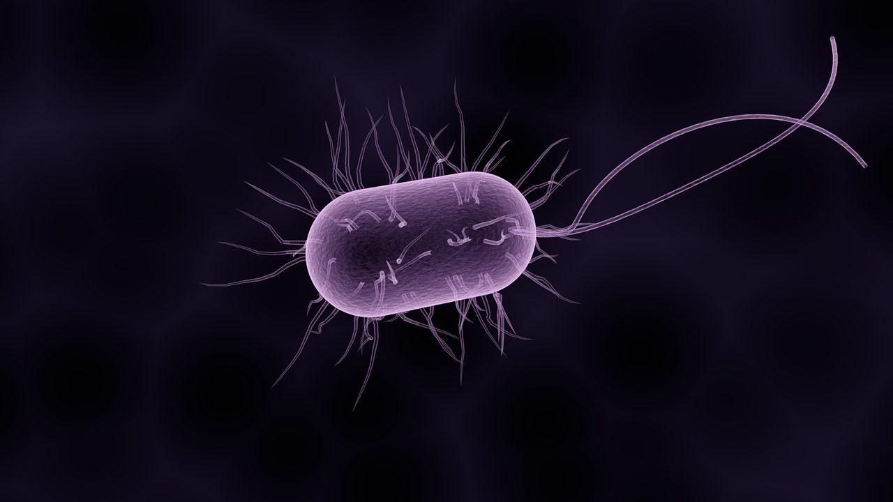 免疫力強化!今日から簡単実践…新型コロナウイルスに備えよ!